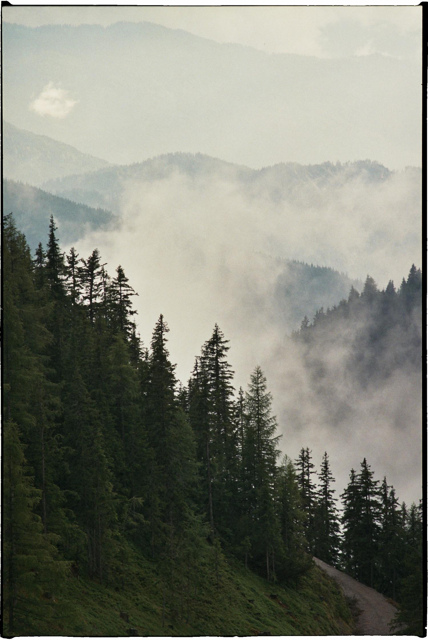 Wald und stein